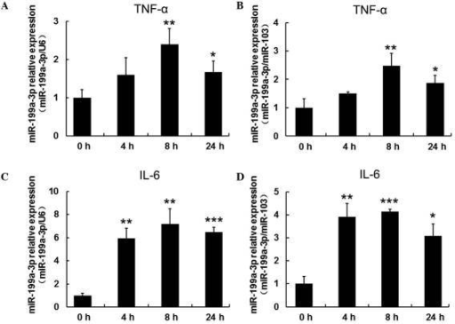 Inflammatory cytokines, TNF-α and IL-6, increased miR-199a-3p expression in human mature adipocytes. Reverse transcription-quantitative polymerase chain reaction was used to analyze miR-199a-3p expression in human mature adipocytes cultured with (A and B) 10 ng/ml TNF-α or (C and D) 30 ng/ml IL-6 at different time points (4, 8 and 24 h). Cells without treatment served as the control group (defined as 0 h). U6 and miR-103 expression served as internal controls for normalization. Values are presented as the mean ± standard deviation of three separate experiments. *P<0.05; **P<0.01; ***P<0.001 vs. the 0 h group. miR, microRNA; TNF-α, tumor necrosis factor-α; IL, interleukin.