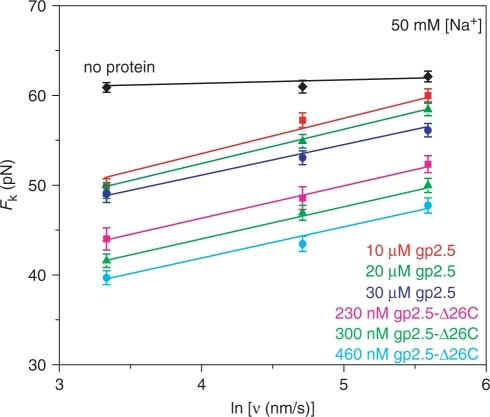 Measured nonequilibrium DNA melting force, Fk (ν), as a function of pulling rate ν. Data are shown in the absence of protein (black diamond) and in the presence of 10 μM gp2.5 (red square), 20 μM gp2.5 (green triangle), 30 μM gp2.5 (blue circle), 230 nM gp2.5-Δ26C (pink square), 300 nM gp2.5-Δ26C (light green triangle) and 460 nM gp2.5-Δ26C (cyan circle). Linear fits are shown as continuous lines. Each data point is obtained by averaging three or more measurements, and error bars are determined from the standard error. Data is taken in 10 mM Hepes (pH 7.5) and 50 mM Na+ (45 mM NaCl and 5 mM NaOH).