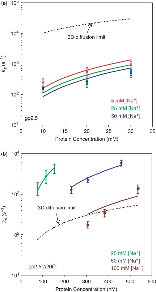 (a) Protein association rate (ka) as a function of protein concentration for gp2.5 in 5 mM salt (red diamond), 25 mM salt (green triangle) and 50 mM salt (blue circle). (b) Protein association rate (ka) as a function of protein concentration for gp2.5-Δ26C in 25 mM salt (green triangle), 50 mM salt (blue circle) and 100 mM salt (brown square). Lines are fit to the data using Equation (5). Dashed lines show the three-dimensional (3D) diffusion limit as discussed in the text (48).