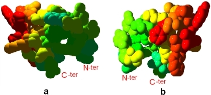 Front (a) and back (b) views shows the thermostability of CD loop region of cyt b. Light blue to red colors show stable to unstable regions, respectively. Tertiary structures are shown in the space-fill mode.