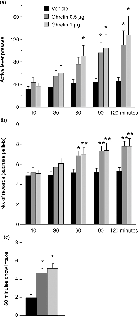 CNS (third ICV) ghrelin delivery increases the rewarding value of sucrose in a PR ratio operant conditioning model. The number of responses on the active lever (a) and the number of 45 mg sucrose rewards obtained (b) are significantly increased by third ICV ghrelin injection for the 120-minute period of operant testing. Short-term intake of freely available chow is also increased by IP ghrelin injection (c). Data represent the mean ± SEM, n = 13, *P < 0.05, **P < 0.005 from vehicle, post hoc Tukey analysis