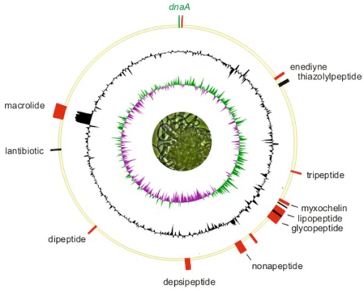 Chromosome of H. aurantiacus strain 114-95T oriented to the dnaA gene (top). The inner ring shows a normalized plot of GC skew, while the center ring shows a normalized plot of GC content. The outer circle shows the distribution of secondary metabolite gene clusters. Biosynthetic gene clusters associated with thiotemplate-based assembly (PKS, NRPS) are depicted in red and bacteriocin loci are marked in black.