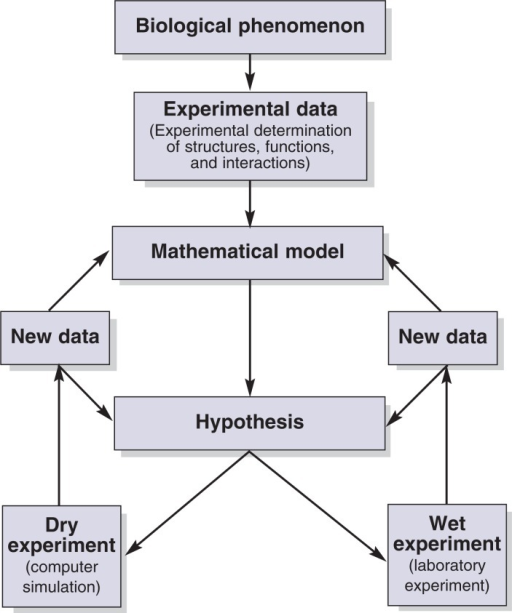 "Schematic representation of the process of knowledge generation in systems biology. Experimental data on a given biological phenomenon serve to derive a mathematical model that leads to hypotheses regarding the effects of perturbation of the system. These hypotheses are tested in ""dry"" and ""wet"" experiments, leading to the generation of new data that may result in confirmation or modification of the hypothesis and the underlying mathematical models."