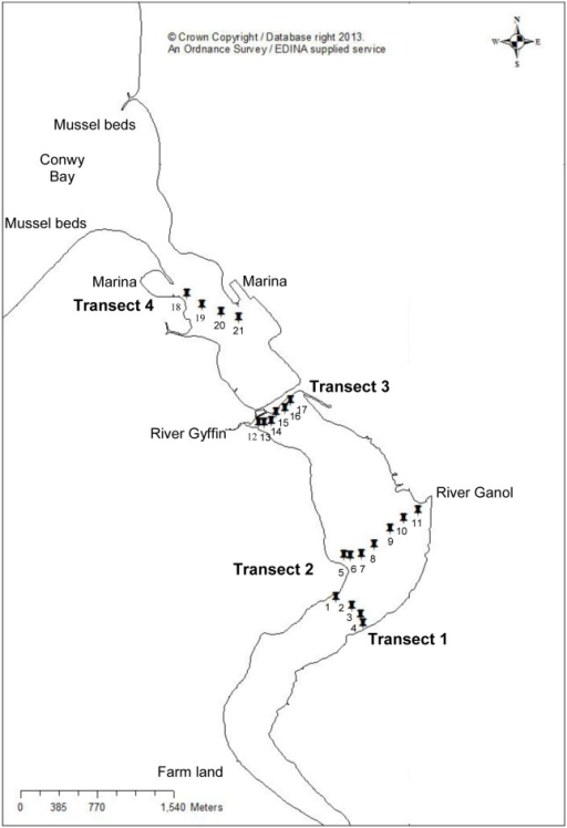 A map of the study site; the Conwy Estuary, North Wales, UK.Water and sediment samples were collected in triplicate from four transverse transects of the Conwy estuary (twenty one sampling sites).