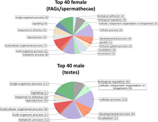 GO Term associations for the top 40 genes expressed in the female and male tissues. Associations were identified with BLAST2GO, using terms at the second level of the GO hierarchy.