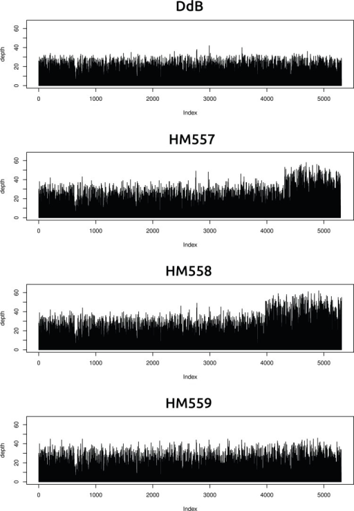 Two new axenic mutant strains possess overlapping duplications on the same chromosome.The samtools 'depth' command was used to calculate the depth of coverage at each position along the chromosomes. A rolling median was obtained (window size 999) to remove outliers, then each chromosome examined by sampling every 1000th position and plotting them sequentially using R (www.r-project.org); the 'index' in the plots refers to these 1000 nucleotide divisions. Contiguous segments with approximately double the average depth reflect likely duplication events. Only two such segments could be identified, on overlapping regions at one end of chromosome four in strains HM557 and HM558: shown here are the plots for this chromosome in all four strains resequenced. These duplications are large, spanning hundreds of kilobases and many genes, and it is possible that they contribute to these strains' growth phenotypes; this hypothesis remains to be tested.DOI:http://dx.doi.org/10.7554/eLife.04940.005