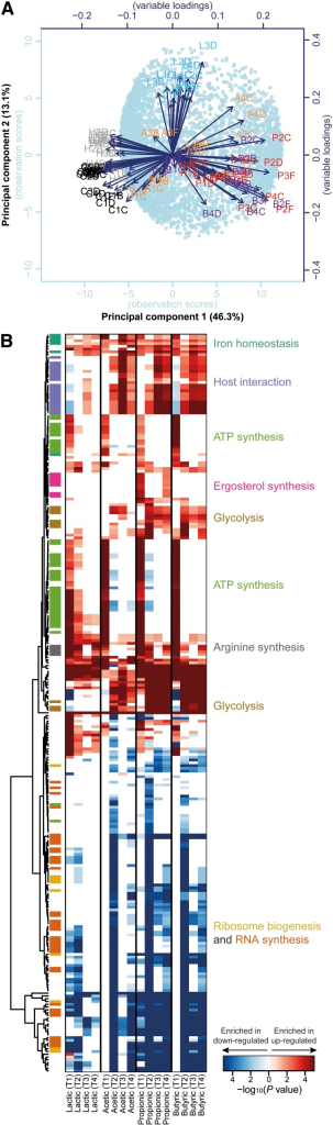 Global transcriptome changes induced by weak organic acids (WOAs) in Candida albicans: (A) Principal component analysis of the entire transcriptome dataset of 6453 transcripts across 89 conditions. Samples are plotted by their first two principal components. The first letter of the sample name represents the treatment (C: De Man, Rogosa, and Sharpe medium [MRS] control, H: HCl, L: lactic, A: acetic, P: propionic, B: butyric acid), the middle number represents the time point (1: T1, 2: T2, 3: T3, 4: T4), whereas the last letter refers to the biological replicate (B, C, D, or F). (B) Hierarchical clustering of Gene Ontology (GO) Biological Process terms based on their enrichment in lists of genes differentially expressed in response to individual WOAs and individual time points. Before enrichment analysis, differentially expressed gene lists were removed of genes also significantly modulated in HCl-treated vs. untreated cells. The heat map is color-coded based on Bonferroni-corrected P values, as indicated by the color bar at the bottom. Only GO terms with an adjusted P value < 5 × 10−4 in at least one of the 16 conditions were included in the heat map. Related GO terms are color-coded based on the more general functional category indicated on the right. Distance metric: Euclidean.
