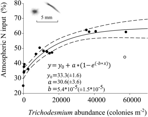 Contribution of calculated atmospheric N input (%) to zooplankton biomass as a function of integrated Trichodesmium abundance (colonies m-2).The station at 18°N, 19°41'W within the eddy (denoted with an empty circle) was excluded from the analysis. The inset shows UVP5 example images of Trichodesmium puff and tuft, respectively.
