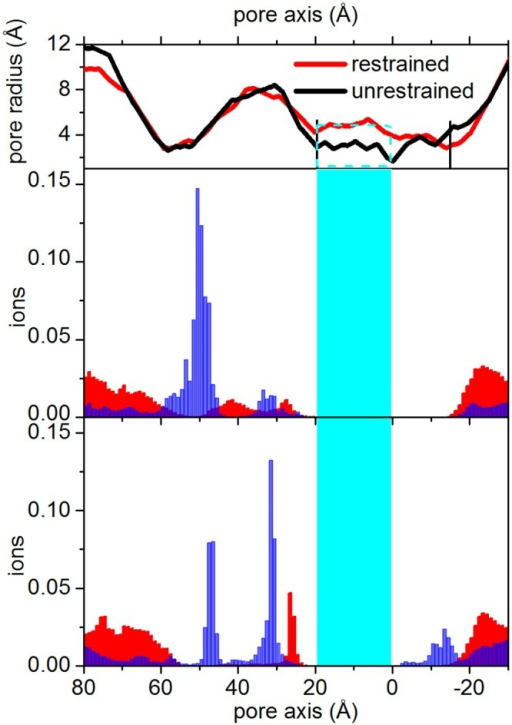 Ions distribution.Blue bars: cations, that can permeate the nicotinic channel. Red bars: anions. Top panels show the channel pore profiles along the full-length protein. Central panel: restrained; lower panel: unrestrained trajectory. The cyan region including the cyan rectangle in the top panel) highlights the channel between Glu20′ and Leu9′. The vertical black lines on the pore profile highlight the cytoplasmic and the extracellular pore limits, from Gly2′ to Glu20′.