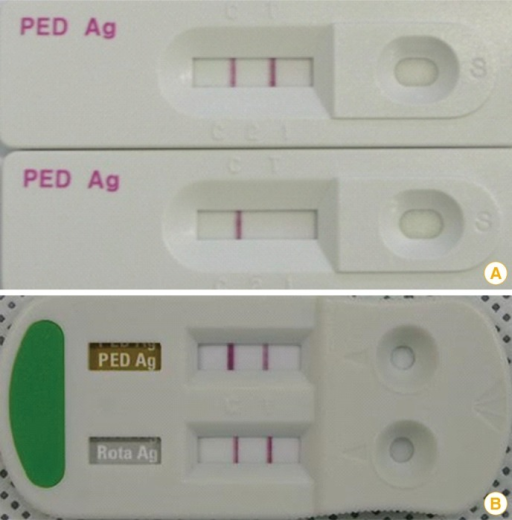 Results of an immunochromatographic assay kit that can be used for porcine epidemic diarrhea virus (PEDV) detection. (A) The upper and lower panels show positive and negative results, respectively. (B) Dual-detecting immunochromatographic kit for the detection of PEDV and porcine rotavirus.