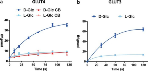 Liposomes reconstituted with GLUT4 or GLUT3 transport d-glucose with high specificity over l-glucose.a, time-dependent uptake of specific d-[3H]glucose and nonspecific l-[3H]glucose into GLUT4-containing PC/POPA/POPE (70:15:15) liposomes in the presence or absence of 20 μm GLUT-specific inhibitor cytochalasin B (CB). Data are the mean ± S.E. of three independent experiments. b, time-dependent uptake of specific d-[3H]glucose and nonspecific l-[3H]glucose into GLUT3-containing PC/POPA/POPE (70:15:15) liposomes. Data are expressed as mean ± S.E. of three independent experiments. Lines depicted in a and b are non-linear fits of the data to guide the readers' eyes.