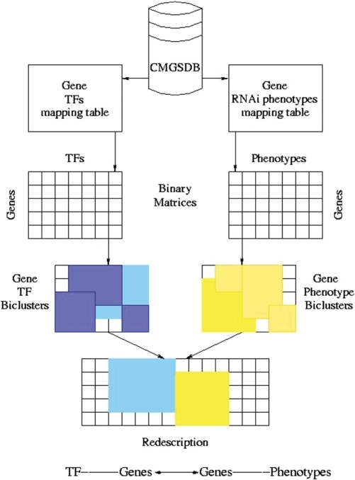 Finding TFs whose knockdown induces improved desiccation tolerance in C. elegans. Two biclusters (shaded rectangles) joined at the gene interface using a redescription between their projections. Below that is the CDM schema, displaying the sequence of primitives.