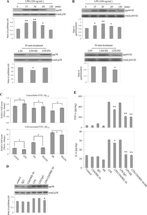 "Activated p38 MAPK and/or p44/42 MAPK by LPS negatively affects microglial phagocytosis of Aβ1–42 peptide.Microglial treatment conditions are indicated and are further described in Materials and Method. Cell lysates were analyzed by Western immunoblotting using specific antibodies that recognize phosphorylated or total p38 MAPK and/or p44/42 MAPK at the indicated time points (A and B, top panel). Phosphorylation of both p38 MAPK and/or p44/42 MAPK after treatment with LPS was inhibited by SB203580 or PD98059 (A and B, bottom panel). Histograms below the immunoblots represent the mean band density ratio±1 SD (pp38 MAPK/total p38 MAPK and/or pp44/42 MAPK/total p44/42 MAPK; n = 3 for each condition presented; *P<0.05, **P<0.001 compared with control). (C) Microglial phagocytosis of Aβ1–42 peptide after pre-treatment with PD98059 or SB203580 for 1 h, then co-treated with ""aged"" FITC-tagged Aβ1–42 and LPS. Supernatants and cell lysates were analyzed for extracellular (top panel) and cell-associated (bottom panel) FITC-Aβ1–42 using a fluorometer (*P<0.05, **P<0.001). (D) Phosphorylation of p38 MAPK and inhibition of this effect by CD45RB antibody. Histograms below the immunoblots represent the mean band density ratio±1 SD (pp38/total p38; n = 3 for each condition presented; *P<0.05 compared with LPS or LPS/IgG). (E) Microglial activation is evidenced by mean TNF-α and IL-6 release±1 SD (n = 3 for each condition presented; *P<0.05; **P<0.001 compared with LPS or LPS/IgG; P<0.05 compared LPS/SB with LPS/CD45RB Aβ/SB). For A–E, one-way ANOVA followed by post hoc Bonferroni testing was utilized. Note: SB = SB203580, PD = PD98059, Ab = antibody, pp = phosphorylatioin."