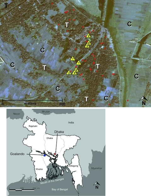 "Top: Distribution of Nipah virus case (n = 12) and control (n = 36) households within the outbreak/study site of Goalando township, Bangladesh, January 2004. Number in the yellow triangle corresponds to household no. in Figure 2. Map also shows extreme habitat disturbance; areas under cultivation (for rice, sugar cane) are highlighted with ""C,"" and remaining trees (fruit trees and bamboo stands) with ""T."" Bottom: Location of outbreak village."
