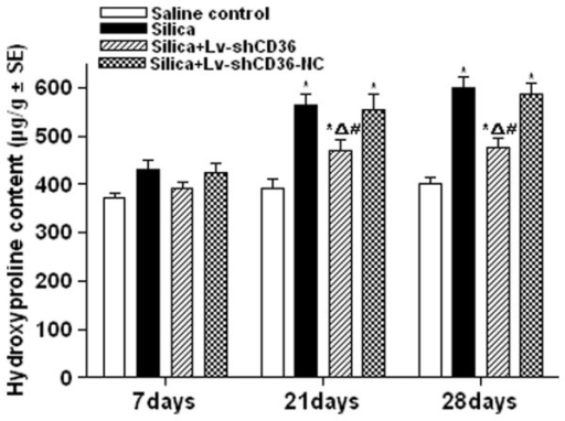 Hydroxyproline content of rat lungs. There was no significant difference in the hydroxyproline content of the four groups at 7 days after instillation. The hydroxyproline content of the silica, the silica+Lv-shCD36, and the silica+Lv-shCD36-NC groups was significantly higher than that of the saline control group at 21 and 28 days after instillation. The hydroxyproline content of the silica+Lv-shCD36 group was significantly lower than the silica and silica+Lv-shCD36-NC groups at 21 and 28 days after instillation. Each bar represents the mean ± SEM. *P < 0.05, as compared to the saline control group;ΔP < 0.05, as compared to the silica group; and #P < 0.05, as compared to the silica+Lv-shCD36-NC group. The data represent the means from experiments done in eight rats.