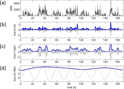 Estimated multi-scale rhythms of motility data obtained by wavelet analysis.(a) Raw data in arbitrary units (a.u) along with the rhythms detected at three different time scales. (b) The detected rhythm (grey line) along with its amplitude (blue line) for a scale of 0.2 h. (c) The corresponding rhythm and amplitude for a scale of 1.04 h. (d) The same measure at a scale of 23.48 h. Wavelet amplitudes are in normalized arbitrary units.
