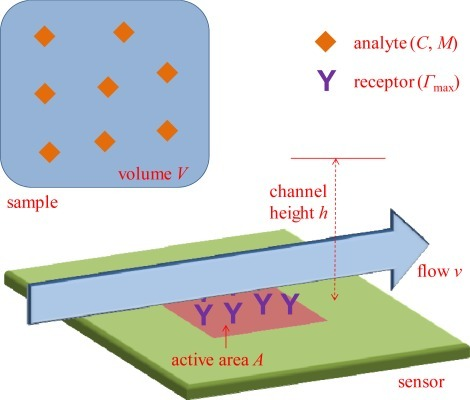 The principle of a surface-based sensor system operating in vitro. On the active area A there are recognition elements for the target analyte, which has molecular weight M and is present in a sample of volume V at concentration C. The sample solution is introduced to the surface in a channel with height h, possibly with continuous flow at an average velocity v. The maximum surface coverage of the analyte Γmax is defined by the number of receptors (and M implicitly).