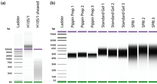 A Comparison Of Sheared H105 1 Genomic Dna Versus Unsh