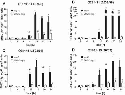 Chronology of EHEC-hlyA and espP expression in EHEC strains during contact with human intestinal epithelial cells. HCT-8 monolayers were infected with overnight cultures of EHEC strains producing EHEC-Hly together with either EspPα (O157 : H7 strain EDL933 and O26 : H11 strain 5236/96) (A and B) or EspPβ (O6 : HNT strain 3503/98 and O163 : H19 strain 36/03) (C and D) for 2–24 h as indicated. Bacteria were harvested by centrifugation, RNA was isolated and transcription levels of EHEC-hlyA and espP were determined using RT-PCR and normalized to gapA. Upregulation of each gene expression relative to 2 h time point was determined using Student's t-test with *P < 0.05 and **P < 0.001. Data are means ± standard deviations from two independent assays.