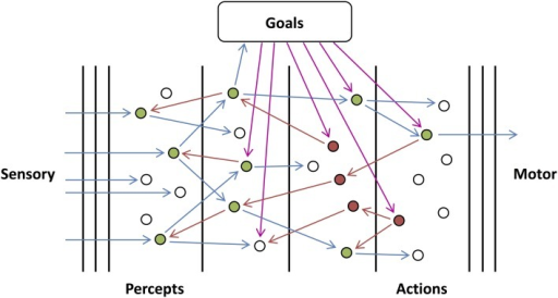 Goal-directed Network. An illustration of the proposed cortical architecture. Sensory, feedforward input (left) is mapped to percepts, actions, and finally motor responses (right), and this mapping is controlled by goal-dependent feedback (top). In the diagram, blue, red, and magenta arrows correspond to feedforward, internal feedback and external feedback (feedback corresponding to the goals of the system) connections, respectively. It should be noted that only the connections from active or searching units have been shown and they would exist other connections which have not been shown. White, green, and red units correspond to resting, active, and searching units, respectively.