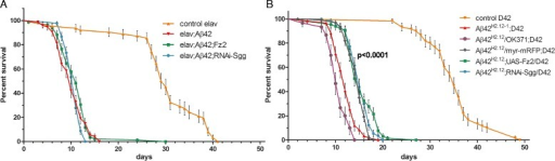 Expression of Aβ42 in the nervous system dramatically reduces the life span. (A-B) Survival curves of the indicated genotypes expressed either with the pan-neuronal driver elav-Gal4(A) or the driver D42-Gal4 which expresses in the glutamatergic motoneurons (B). P < 0.0001 comparing the controls elav-Gal4 and D42-Gal4 to Aβ42 expression, respectively. p = 0.0028 comparing Aβ42; D42-Gal4 and Aβ42/OK371-Gal4; D42-Gal4. Co-expression of Fz2 or RNAi-Sgg did not rescue life span. P-values are calculated with the Log-rank test.