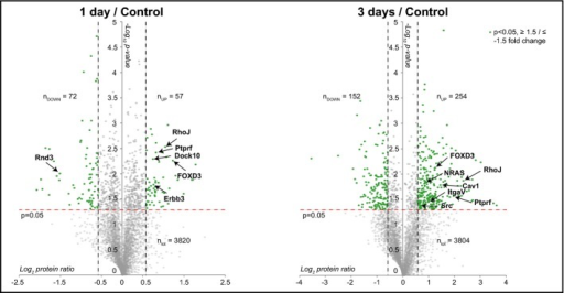 MS analysis identifies proteins potentially contributing to melanoma survivalVolcano plots of protein expression levels at 1 day (left panel) and 3 days (right panel) compared to control sample. Statistically significant entries with a P-value < 0.05 and fold change ≥ 1.5 and ≤ −1.5 are labeled in green (one-sample t-test against 0). For simplicity, only some proteins have been tagged. ntot, nUP and nDOWN indicate the total number of proteins quantified in the three biological replicates and the number of statistically significant proteins that are up-regulated and down-regulated in the three biological replicates, respectively.