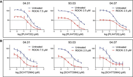 Targeted ROCK inhibition increases the toxicity of inhibitors of the MAPK pathwayThree independent melanoma cell lines (04.01, 93.03 and 04.07) were treated with dilution series of PLX4720 either alone or in combination with the ROCK inhibitor GSK269962A. After 3 days, cell viability was determined by a cell titer blue assay and represented in the y-axis.Cells were treated same as in (A), but with a dilution series of the ERK inhibitor SCH772984.