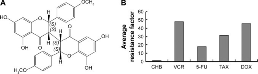 CHB exerts anti-MDR activity in vitro.Notes: (A) Chemical structure of CHB; (B) average resistance factors of CHB and four reference agents.Abbreviations: CHB, chamaejasmin B; MDR, multidrug resistance; TAX, paclitaxel; DOX, doxorubicin; VCR, vincrinstine; 5-FU, 5-fluorouracil.