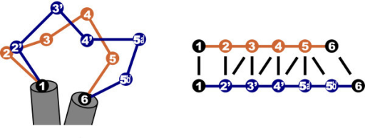 Dealing with structural flexibility: a single insertion (5', left) can lead to ambiguity in the pairwise residue alignment between the loops (right). Therefore, a simple one-to-one functional equivalence between residues from different proteins may not exist.