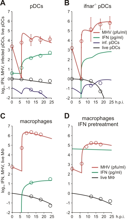 MHV infection and IFN response kinetics in vitro.Experimental data (open symbols) represent the geometric mean ±SEM. Virus titers (red), IFN-α concentration (green) and the fraction of live cells out of the total initial target cell number (black) were used to calibrate the model. (A) In vitro MHV infection of pDCs (MOI = 1). Fraction of infected cells in the population of live cells is shown in blue. (B) MHV infection in pDCs derived from ifnar−/− mice. Fraction of infected cells in the population of live cells is shown in blue. Experimental validation had been performed using infection of pDCs with EGFP-recombinant MHV (blue circles). (C) MHV replication in wild-type Mφs. The data on the amount of secreted IFN-α were used to validate the calibrated model (green circles). (D) Effect of IFN pre-treatment (500 IU of IFN-α, green line) on MHV replication in wt Mφs.