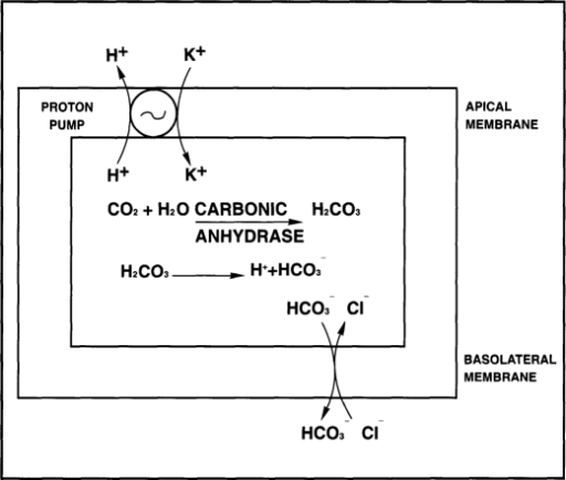 determination of carbonic acid For co2 perturbation experiments has so far not been determined  second  dissociation constants of carbonic acid (pk1 and pk2) is needed,.
