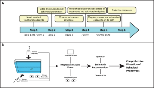 Flowchart illustrating the experimental strategy of this study.The rationale (A) includes examining traditional, manually recorded novel tank test behavioral endpoints across several treatments and trials (Step 1). Video-tracking analysis was then performed to generate additional automated behavioral endpoints and raw spatiotemporal data for three-dimensional (3D) swim path reconstructions (Steps 2–3), followed by hierarchical clustering (Step 4) across all behavioral endpoints and experimental treatments in order to discover potential overlaps between manual and automated endpoints. These overlaps were reconfirmed using the 3D swim path reconstructions (Step 5). Finally, our interpretation of the observed affective states was verified with measured endocrine responses (Step 6). The experimental process (B) was standardized for all novel tank trials. Naïve, wild-type zebrafish were placed in an unfamiliar, novel tank for 6 min. Animal behavior was manually observed and two cameras recorded videos for automated analysis in EthoVision XT7 (during which manual, event-based scoring was also performed). Track data for each subject was exported, processed and visualized in a 3D scatter plot with RapidMiner 5.0.