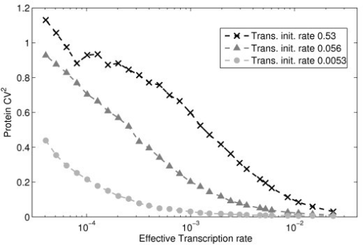 Noise in protein levels for varying transcription and translation initiation rates. Noise (CV2) in protein levels for varying effective transcription initiation rates and three different rates of translation initiation. mRNA and protein degradation rates are set so that the mean mRNA and mean protein levels at steady state are identical in all cases.