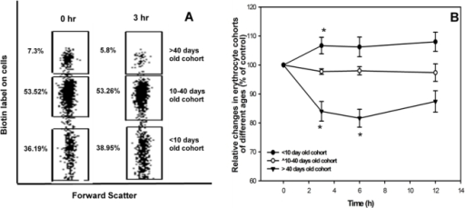 Effect of single intravenous dose of AF-SWCNTs on the proportions of erythrocyte cohorts of different age groups in mouse blood.Mice were prepared by DIB technique as described in materials and methods. AF-SWCNTs (100 µg) was administered i.v. and proportions of erythrocyte cohorts of different ages in blood circulation were monitored. Erythrocyte cohorts were identified by biotin levels on erythrocytes as per the DIB technique [9]. Results of a representative experiment in panel A show the distribution of the three erythrocytes cohorts [Old erythrocytes, (biotinhigh, age>40 days, top boxes); intermediate age erythrocytes(biotinlow age10–40 days, middle boxes); young erythrocytes (biotinnegative age<10 days, lower boxes)] before and 3h after intravenous administration of AF-SWCNT (100 µg) in 6–8 weeks old Swiss mice. Blood samples were also taken from these mice at different intervals of time and effect of AF-SWCNT administration on the distribution of the three erythrocyte cohorts was assessed at each time points (panel B). Proportion of young, intermediate and old erythrocytes at zero time point were taken as hundred and changes induced by AF-SWCNTs have been depicted as percent of control. Each data point in panel B represents mean ± SEM of data from swiss mice. *p<0.05 as compared to control groups by ANOVA.