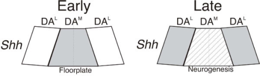 Acquisition of neurogenic potential in midbrain floorplate cells. From analysis of gene expression, the midbrain DA neuron progenitor domain can be subdivided into medial (DAM) and lateral (DAL) domains. Left, at early embryonic stages, medial DA progenitor cells resemble floorplate cells expressing high levels of Shh (pale gray). Right, downregulation of Shh (striped pale grey) in the medial progenitor domain at later stages in embryogenesis promotes neurogenesis from the medial progenitor domain.