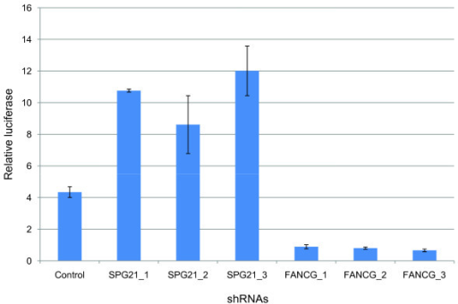 Effect of SPG21 and FANCG knockdown on viral promoter activation. Jurkat-LTR-Luc cells were transduced with lentiviral particles expressing a control shRNA and three validated shRNAs targeting various sequences of the SPG21 and FANCG mRNAs. Cells were cultured for 24 hours, and luciferase activities were determined from cell lysates and normalized to corresponding cell viability data (measured by WST1 test). Results are means of three experiments and error bars indicate standard errors.