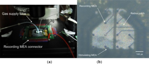 Experimental setup. (a) Interconnection between the MEAs in the camber and the data acquisition system. (b) Sensing part showing recording MEA, isolated retina and the stimulation MEA, which corresponds to center part of Figure 2. (Note that the microscope is focused at the recording MEA and the other layers are out of focus).