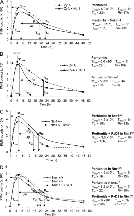 Netrin-1 stimulates resolution via RvD1. Resolution indices were used as previously defined (Bannenberg et al., 2005), including Ψmax (maximal PMN), Tmax (time point when PMNs reach Ψmax), T50 (time point corresponding to 50% reduction), and Ri (resolution interval, the time interval from Ψmax to 50% reduction point [i.e., T50-Tmax]). (A) Mice were injected i.p. with 1 mg of zymosan A (ZyA) and, subsequently, i.v. with either vehicle or recombinant netrin-1 (1 µg). Peritoneal exudates were collected at indicated time intervals and neutrophils (PMN) were enumerated by using light microscopy and flow cytometry. (B) Mice were treated as in panel A, and netrin-1 was given at the peak of inflammation (4h after ZyA). (C) Ntn1+/+ were injected i.p. with ZyA (1 mg) and subsequently with RvD1 (1 µg/mouse). Recruited leukocytes were enumerated at indicated time points. (D) Ntn1+/+ and Ntn1+/− mice were injected i.p. with ZyA (1mg) and subsequently with vehicle or RvD1 (1 µg/mouse), and peritoneal exudates were collected at indicated time intervals. Results in A–D represent 2 independent experiments with n = 4–6 mice per treatment per time point expressed as mean.