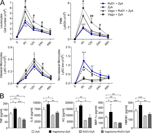 RvD1 rescues hyperinflammation in vagotomized mice. Vagotomized or sham-operated control mice were injected i.p. with zymosan A (ZyA) and subsequently with RvD1 (RvD1). Peritoneal lavages were collected at indicated time points. (A) Total leukocytes were enumerated by light microscopy. PMN, classical monocytes, and nonclassical monocytes were determined by flow cytometry. (B) TNF, IL-6, KC, MIP-1α, and HMGB1 were measured in exudates by ELISA. Results are mean ± SEM, n = 6 per group for two independent experiments. *, P < 0.05; **, P < 0.01; ***, P < 0.001.