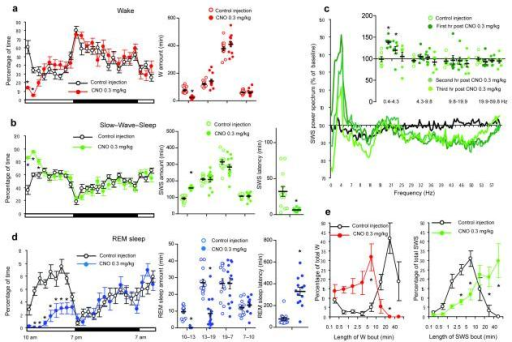 Activation of PZ GABAergic neurons increases slow–wave–sleep (SWS) during the subjective dayPanels a, b and d show sleep–wake quantities following vehicle and CNO (0.3 mg/kg, IP; 10 A.M.; n = 13) injections in mice with bilateral expression of the hM3Dq receptor in PZ GABAergic neurons, including the average hourly sleep–wake amounts (% of time ± SEM); the total sleep–wake amounts (± SEM) during (1) the 3 hrs post–injection period (10AM-1PM), (2) the remainder (6 hrs) of the light/sleep period (1PM-7PM), (3) the subsequent 12 hr dark period (7PM-7AM) and the next day first 3 hr of the light period (7AM-10AM); and the SWS and REM sleep latencies (± SEM). Panel c shows the SWS power spectrum changes over baseline during the 3 hr post–injection period for vehicle injection as compared with the first, second and third hour post–injection period for CNO (0.3 mg/kg; n = 7 mice) and the quantitative changes (± SEM) in power for the δ (0.4–4.3 Hz), θ (4.3–9.8 Hz), α (9.8–19.9 Hz) and β+ γ (19.9–59.8 Hz) frequency bands (± SEM) following vehicle or CNO (n = 7) administrations. In panel e time–weighted frequency histograms show the proportion (± SEM) of W or SWS amounts in each bout length to the total amount of W or SWS in the 3 hours post–injection period following vehicle or CNO administration (n = 13). CNO: clozapine–N–oxide; two-way ANOVA followed by a post hoc Bonferroni test or paired T test * p < 0.05.