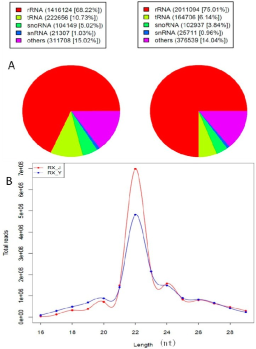 (A) Pie chart for Rfam RX_J and RX_Y and (B) Length distribution analysis.