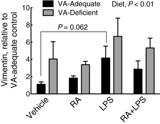 Relative mRNA expression of vimentin in VAA and VAD diet rat liver. Vimentin mRNA in VAA (black bars) or VAD (grey bars) rats, determined by qRT-PCR. Normalized values were expressed as the mean ± SEM of n = 5 (n = 4 for VAD vehicle)/group, with the VAA control group set to 1.0. Diet was a significant main effect, P <0.01, and LPS treatment marginally increased vimentin mRNA expression, P = 0.062 compared to the VAA vehicle control group.