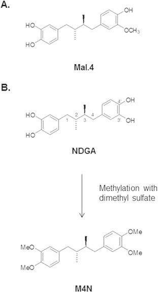 Important methylated lignans from creosote bush of medical relevance: Antiviral 3′-O-methyl nordihydroguaiaretic acid (Mal-4) and anticancer tetra-O-methylnordihydroquaiaretic acid (M4N). Other lignans isolated from the creosote bush also possess antiviral and anticancer activities.