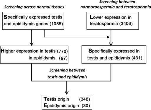 Flowchart of identification of key teratospermia-associated genes.