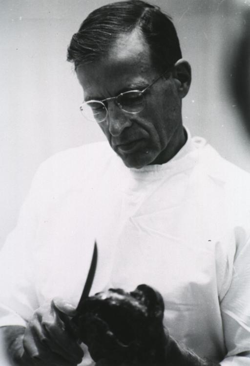 <p>Half length, turned slightly to left; head down; wearing glasses; wearing white gown; making sections of heart specimen.</p>