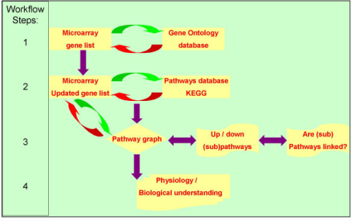 The workflow diagram describing the individual steps taken by the software from microarray data to physiological understanding via pathways analysis. Step 1: A PERL script uses a text file with a list of all genes on the microarray to search the Gene Ontology database for synonyms. These Synonyms are added to the gene list. Step 2 uses this updated gene list to search the KEGG pathway database for pathways in which the genes are involved. If one or more pathways were found for a gene the KEGG database returns a list of pathway names for that gene and a link to the reference pathway for each pathway. Both are added to the file. Step 3 combines the results of the microarray and the pathways. All genes of the pathway represented on the microarray have an expression pattern consisting of the expression in the Longissimus muscle at seven time points during gestation. First all genes of the pathway are considered. Secondly, if more than one biochemical path is specified by the pathway (i.e. called subpathways) the individual subpathways are investigated separately. Thirdly, if KEGG-pathways are linked either because the pathway indicates it or because at least one gene is found in two or more pathways, a network of these pathways is constructed. In step 4 the expression patterns of these pathways and networks were analysed for comparable expression patterns that may indicate common regulatory events linking genes in pathways, subpathways, or networks of pathways creating biological understanding of the physiology of the studied processes.