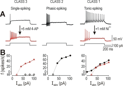 Necessity of oppositely directed subthreshold currents to explain                            excitability in spinal lamina I neurons.(A) Blocking a subthreshold Ca2+ current with                                Ni2+ converted tonic-spiking neurons to                            phasic-spiking (right). Blocking a subthreshold K+                            current with 4-AP converted single-spiking neurons to phasic-spiking                            (left). Compare with naturally occurring phasic-spiking pattern                            (center). (B) Application of Ni2+ and 4-AP converted                            class 1 and 3 neurons, respectively, to class 2 neurons according to the                                f–I curves. Firing rate was determined                            from the reciprocal of first interspike interval. According to these                            data, a subthreshold inward current is necessary for class 1                            excitability, a subthreshold outward current is necessary for class 3                            excitability, and class 2 excitability occurs when neither current is                            present.