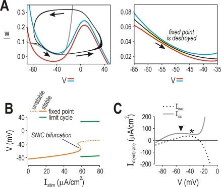 Depolarization-induced inactivation of a subthreshold outward currentcan also produce class 1 excitability.(A) Inactivation of an A-type K+ current bysubthreshold depolarization should shift the balance of inward andoutward currents the same way that depolarization-induced activation ofan inward current does, and is therefore predicted to encourage class 1excitability. To test this, we warped the w-clineto give it a region of negative slope at subthreshold potentials (see[55]); this was done by changing Equation5 so that  whereβw = −10mV,γw = 10mV,βw* = −60mV,γw* =  = 20mV, and ξ = 0.1. Under theseconditions, the V- and w-clinesintersected tangentially at rheobasic stimulation. (B) This phase planegeometry resulted in an SNIC bifurcation and class 1 excitability, aspredicted. (C) Inactivation of the A-type K+ currentat subthrehsold potentials gave a region of negative slope on the steadystate I–V curve thatoverlapped the apex of the instantaneousI–V curve.
