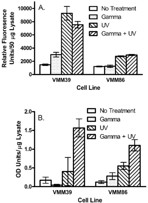 Induction of apoptosis in melanoma cell lines following gamma-irradiation and/or UV-irradiation. Melanoma cells prepared for vaccination were non-irradiated, gamma-irradiated (200 Gy), UV-irradiated (5 min), or both gamma-irradiated (200 Gy) and UV-irradiated (5 min). The cell lines were then cultured in vitro for eight hours prior to assaying (A) caspase activity or (B) DNA fragmentation.