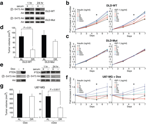 PIK3CA activating mutations or PTEN loss suppress tumour sensitivity to DRa, Phospho-S473 Akt and total Akt levels in DLD-WT and DLD-Mut cells in the presence or absence of serum for 1 or 24 hours. b, c, and f, Proliferation curves of DLD-WT, DLD-Mut, and doxycycline(Dox)-treated (1µg/ml) U87-MG cells in the presence of increasing concentrations of insulin or IGF-1, n=6. * indicates P ≤ 0.001 as in Fig. 2a, b. d, Volumes of DLD-WT and DLD-Mut tumours in AL or DR mice (n= 7–10). e, PTEN, phospho-S473 Akt and total Akt levels in U87-MG cells in the presence or absence of Dox (left panel) and in Dox-treated U87-MG cells in the presence or absence of serum for 1 hour or 24 hours (right panel). g, Volumes of U87-MG tumours in AL and DR mice administered drinking water with or without Dox (n= 7–9). Data in b, c, d, f and g represent means ± s.e.m.